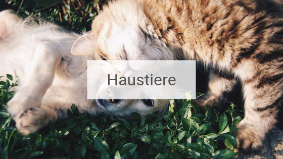 Katze schmiegt sich spielend an in Gras liegenden Hund