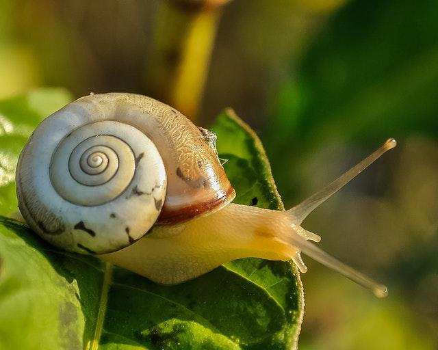 Escargot sur des feuilles
