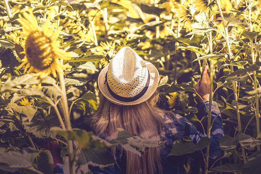 Femme portant un chapeau dans un champs de tournesols