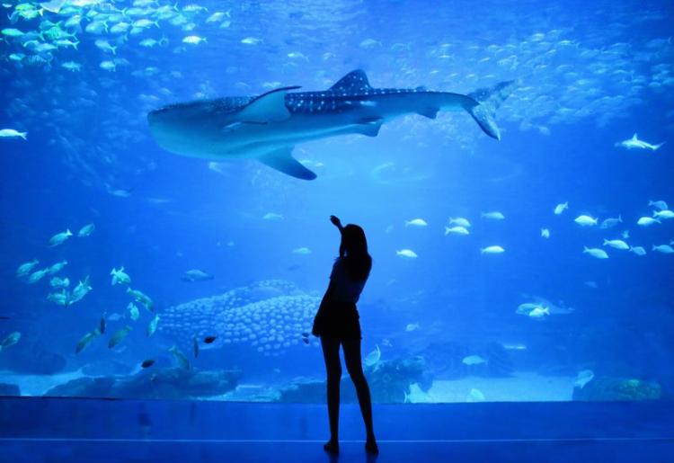 soiree-a-l-aquarium