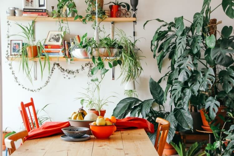House with indoor plants