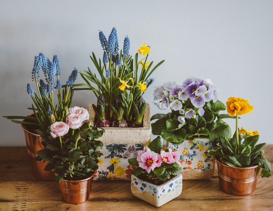 indoor potted flowers