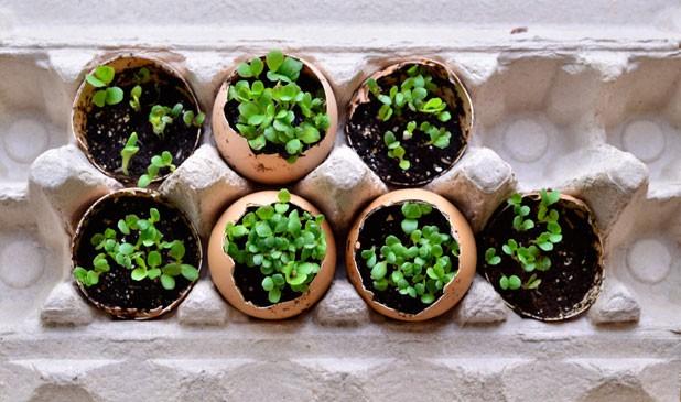 plants growing in eggshells