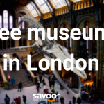 free museums and galleries in london natural history museum